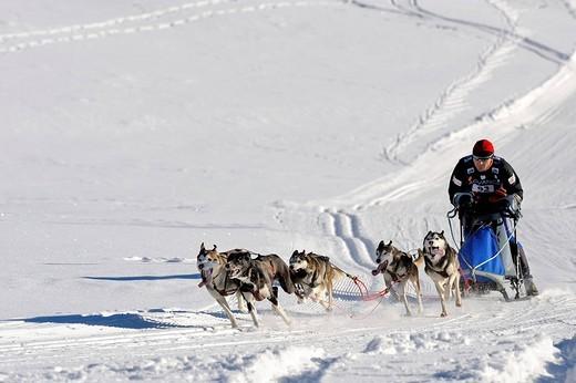 Stock Photo: 1848-263704 Dog_sled team, Unterjoch, Allgaeu, Bavaria, Germany, Europe