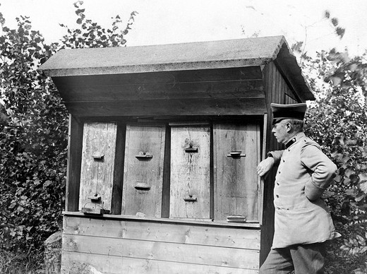 Stock Photo: 1848-265636 Historic photograph, beekeeper, around 1915