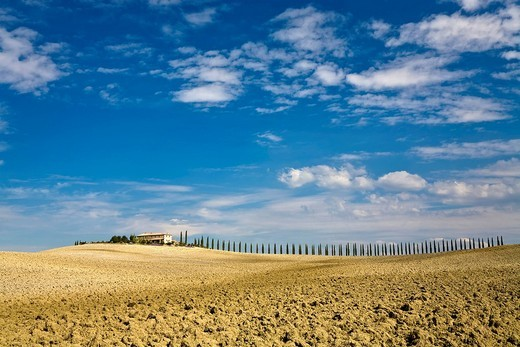 With cypresses Cupressus lined country house in the valley Val d´Orcia Crete Tuscany Italy : Stock Photo