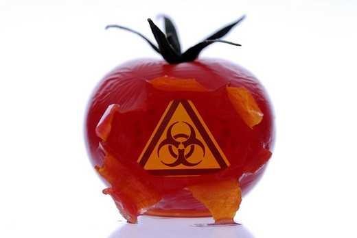 Burst tomato with a biohazard symbol, symbolic image for genetically modified vegetables : Stock Photo