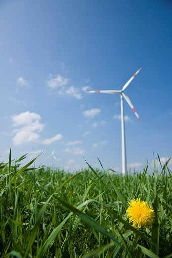 Wind turbine on a field : Stock Photo