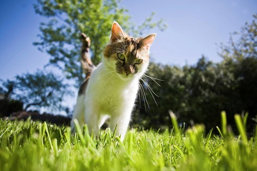 Stock Photo: 1848-29300 Young cat in the garden