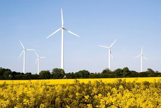 Wind turbines in a blooming canola field Brassica napus, Northern Germany, Schleswig_Holstein, Germany, Europe : Stock Photo