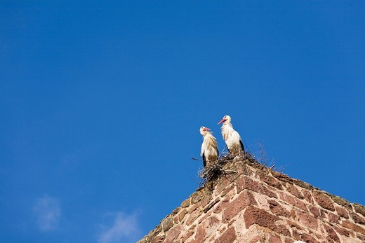 Stock Photo: 1848-34513 Two storks Ciconia perching on their nest on the historical city wall, Silves, Portugal