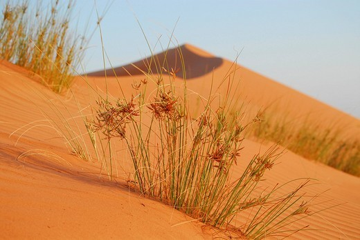 Stock Photo: 1848-36129 Sand dune, Wahiba Sands Wahiba desert, Oman
