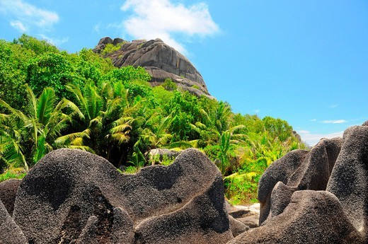 Granite rocks and palm vegetation, La Digue, Seychelles : Stock Photo
