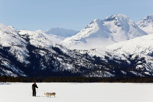Man skijoring, sled dogs pulling cross country skier, dog sport, Alaskan Huskies, frozen Lake Lindeman, mountains behind, Coastal Range, Chilkoot Pass, Chilkoot Trail, Yukon Territory, British Columbia, B. C., Canada : Stock Photo