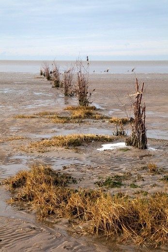 Stock Photo: 1848-403177 Markings in the mudflats, Niedersaechsisches Wattenmeer National Park, Cuxhaven, North Sea, Lower Saxony, Germany, Europe