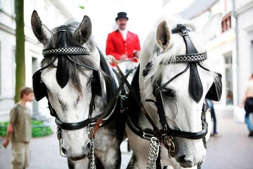 Stock Photo: 1848-404852 Wedding carriage, white horses, coachman