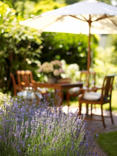 Stock Photo: 1848-407170 Romantic garden table with lavender bushes in atmospheric sunlight
