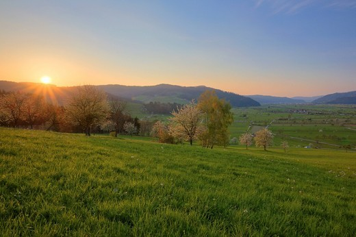 Spring landscape at sunset, Kinzigtal Valley, Black Forest, Baden_Wuerttemberg, Germany, Europe : Stock Photo