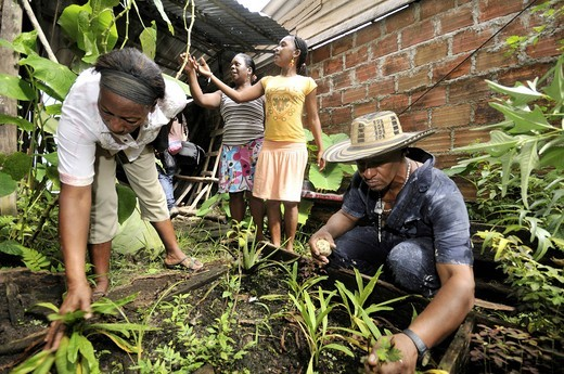 Women and man, Afro_Colombians, in a small herb garden for traditional medicinal herbs, in the Bajamar slum, Buenaventura, Valle del Cauca, Colombia, South America : Stock Photo