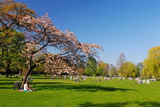 Spring bloom at the Aussenalster lake in Hamburg, Germany, Europe : Stock Photo