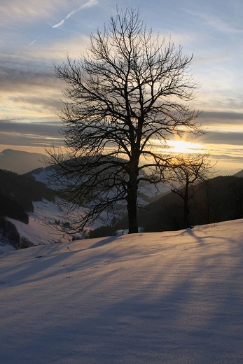 Winter landscape in Baselbiet, Switzerland, Europe : Stock Photo