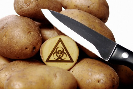 Potatoes and knife, warning sign for biohazard, symbolic image for genetically modified potatoes : Stock Photo