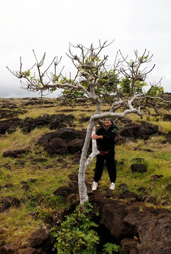 Stock Photo: 1848-415390 Tree at a cave entrance with a woman, Easter Island, Chile