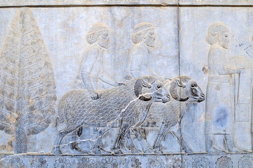 Famous bas_relief with sheep ram on the Apadana Palace, Achaemenid archeological site of Persepolis, UNESCO World Heritage Site, Persia, Iran, Asia : Stock Photo