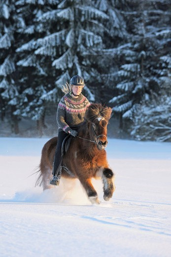 Young rider on an Icelandic horse galloping in deep snow in the evening : Stock Photo