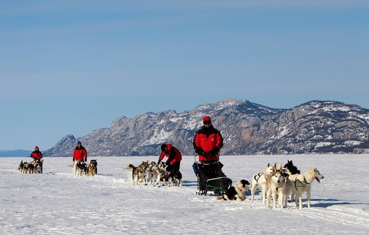 Men, mushers with dog sleds, teams of sled dogs, Alaskan Huskies, mountains behind, frozen Lake Laberge, Yukon Territory, Canada : Stock Photo
