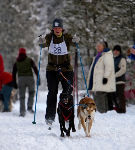 Young woman skijoring, sled dogs pulling cross country skier, dog sport, Alaskan Huskies, Carbon Hill dog sled race, Mt. Lorne, near Whitehorse, Yukon Territory, Canada : Stock Photo