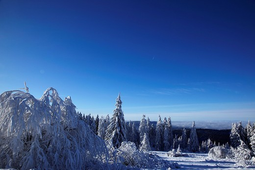 Stock Photo: 1848-419348 Snow_covered fir trees amidst a snowy landscape, winter, Black Forest, Baden_Wuerttemberg, Germany, Europe