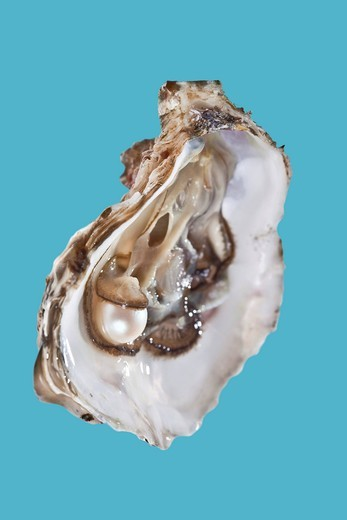 Opened oyster with pearl : Stock Photo