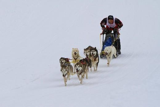 Dog sled, dog sled race, Krung, Bad Mitterndorf, Styria, Austria, Europe : Stock Photo