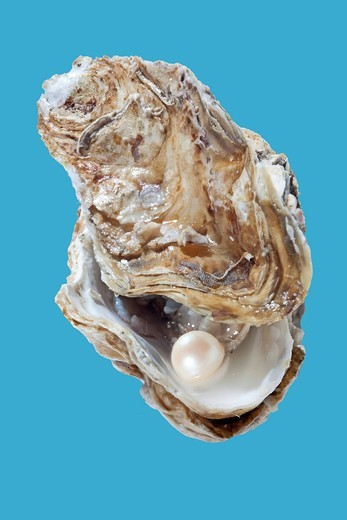 Stock Photo: 1848-421109 Opened oyster with pearl
