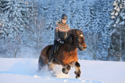 Stock Photo: 1848-421518 Young rider on an Icelandic horse galloping in deep snow in the evening
