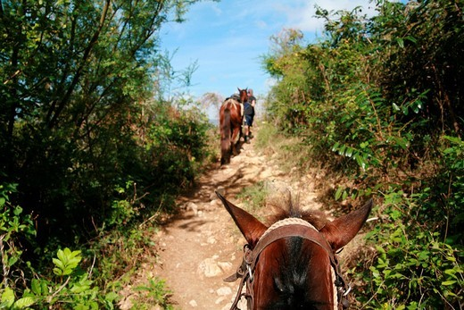 Horse on a trail near Trinidad, Sancti_Spíritus Province, Cuba, Latin America : Stock Photo