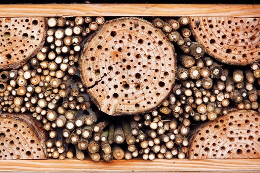 Artificial nest box for wild bees and other insects with wood and elderberry stems, wild bees_nest boxes, insect nest boxes : Stock Photo