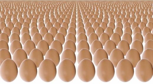 Many eggs : Stock Photo