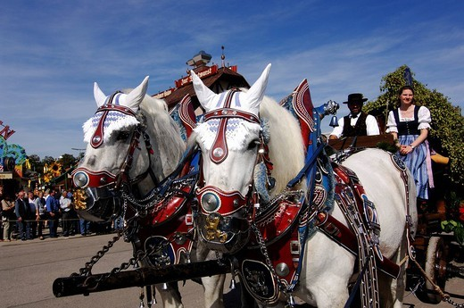 Stock Photo: 1848-42677 Coach horses, carriage, opening ceremony, entering of the breweries, Wies´n, October fest, Munich, Bavaria, Germany, Europe