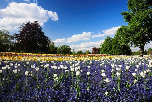 Flowers blooming in spring, Killesbergpark, Stuttgart, Baden_Wuerttemberg, Germany, Europe : Stock Photo