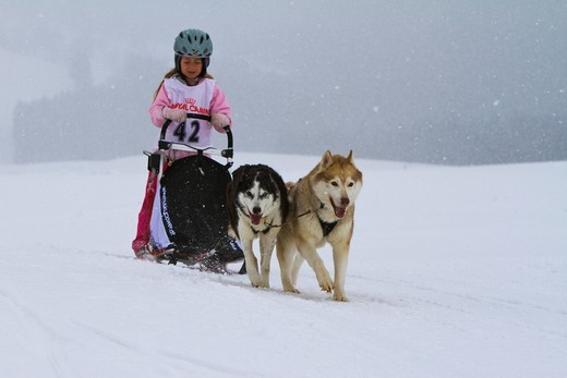 Stock Photo: 1848-430741 Girl sledging with dog sled at a race, Krung, Bad Mitterndorf, Styria, Austria, Europe