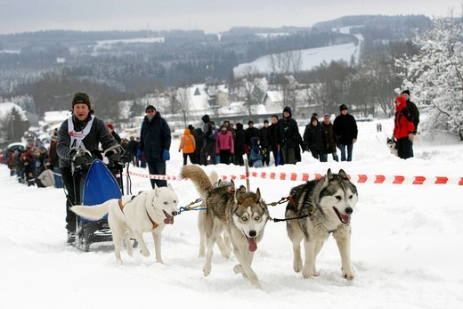 Sled dog race in Liebenscheid, Rhineland_Palatinate, Germany, Europe : Stock Photo