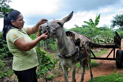 Farmer taking her produce to the market on a donkey cart, municipality of Santa Anita de la Frontera, Chiquitania, Santa Cruz Department, Bolivia, South America : Stock Photo