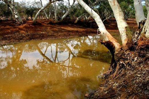 Water billabong with Eucalyptus trees, Northwest Australia : Stock Photo
