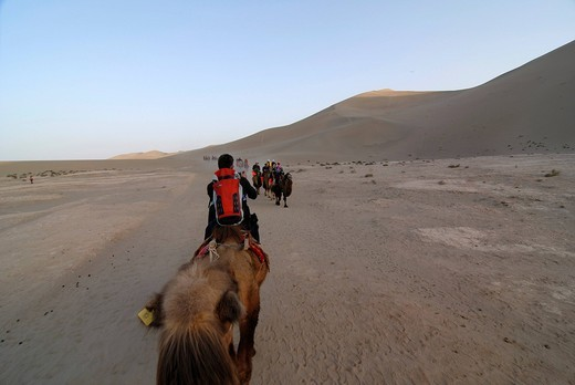 Camel caravan with tourists in front of the sand dunes of the Gobi Desert and Mount Mingshan at Dunhuang, Silk Road, Gansu, China, Asia : Stock Photo