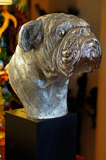 Silver bust of a bulldog, Villa Ambiente, Im Weller, Nuremberg, Middle Franconia, Bavaria, Germany, Europe : Stock Photo