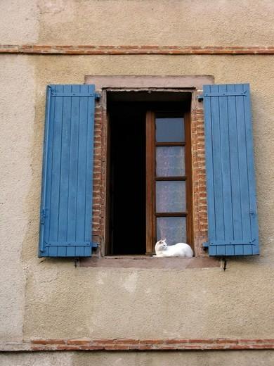 White cat in window, blue shutters, Albi, France, Europe : Stock Photo
