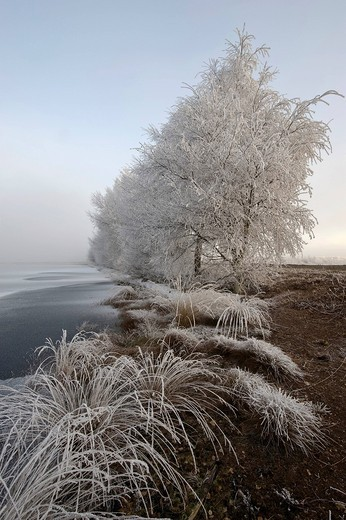 Winter scene on the moor, Lower Saxony, Germany, Europe : Stock Photo