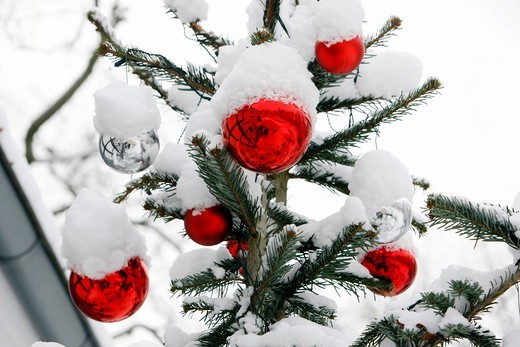 Snow_covered Christmas tree with red balls : Stock Photo