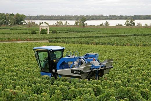 Tractor, grape harvest, vineyard, Blaye, Gironde, Aquitaine, France, Europe : Stock Photo