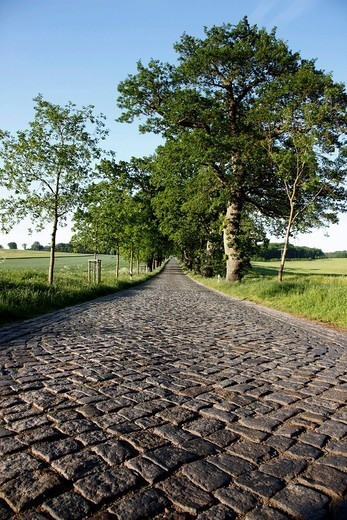 Country road, avenue, part of the Deutsche Alleenstrasse German Avenue Road, between Granitz and Putbus, Ruegen island, Mecklenburg_Western Pomerania, Germany, Europe : Stock Photo