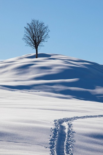 Single tree, winter landscape with fresh snow in the Alpstein massif, Appenzell, Switzerland, Europe : Stock Photo