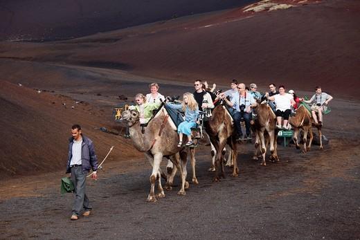 Camel rides, dromedaries in Timanfaya National Park, Montañas del Fuego volcanoes, Lanzarote, Canary Islands, Spain, Europe : Stock Photo