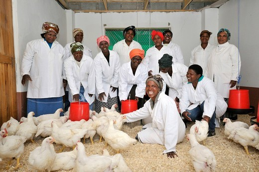 Poultry project of a women´s group, group picture in the coop, Lady Frere, Eastern Cape, South Africa, Africa : Stock Photo