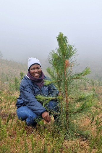 Woman beside a young pine, reforestation, creation of a pine forest in the rugged mountains near Cata_Village in the former homeland of Ciskei, Eastern Cape, South Africa, Africa : Stock Photo