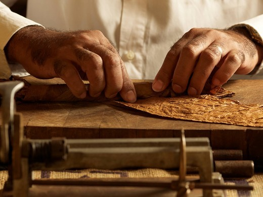 Cuban cigar roller rolling tobacco leaves to produce a cigar : Stock Photo